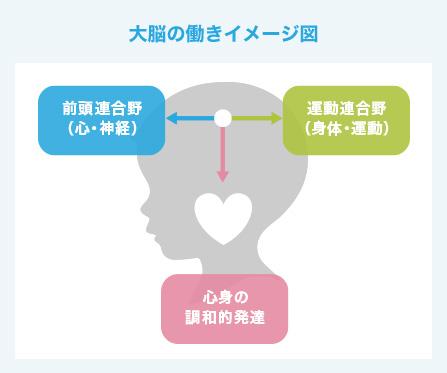 大脳の働きのイメージ図